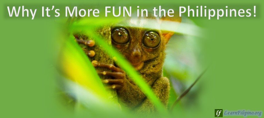 Bohol, Tarsier, Philippines. Just one of the many you can see in the forests of Bohol and other types of creatures in other islands. Won't it be fun to get lost in the forest and see them.