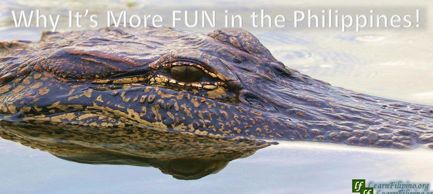 Crocodile, Philippines. The largest crocodile ever captived was housed in the Philippines. Look for farms that take care of them in Palawan. Sure it will be enjoyable to see them!