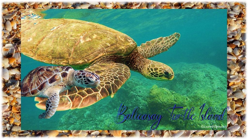 Balicasag Turtle Island, Philippine beach
